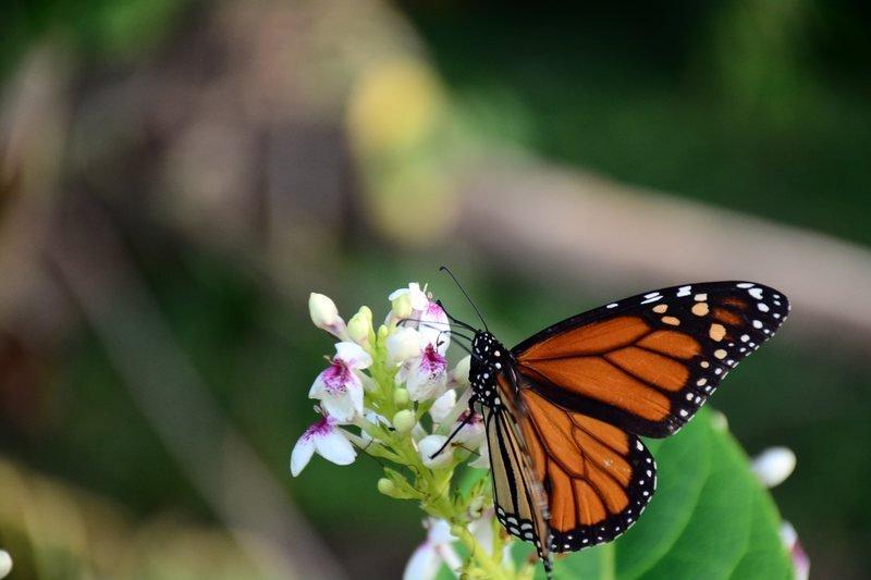 Fototapeta Na ścianę Motyl Na Kwiatach Fp 2842