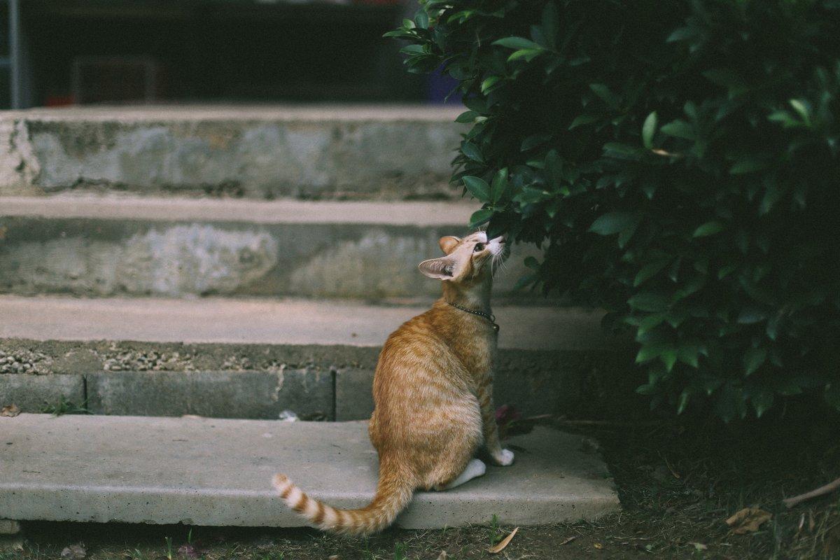 Fototapeta Na ścianę Rudy Kot Wąchający Krzak Fp 4885 Wally