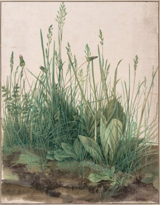 Reprodukcja The Large Piece of Turf, Albrecht Durer